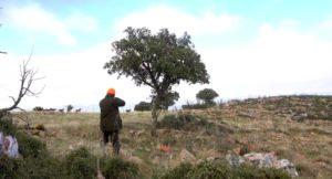 Monterías en Ciudad Real (Castilla la Mancha)